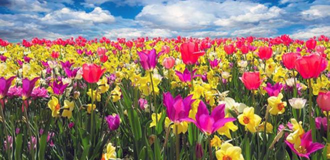 Natur erwacht – langsam wird es Frühling