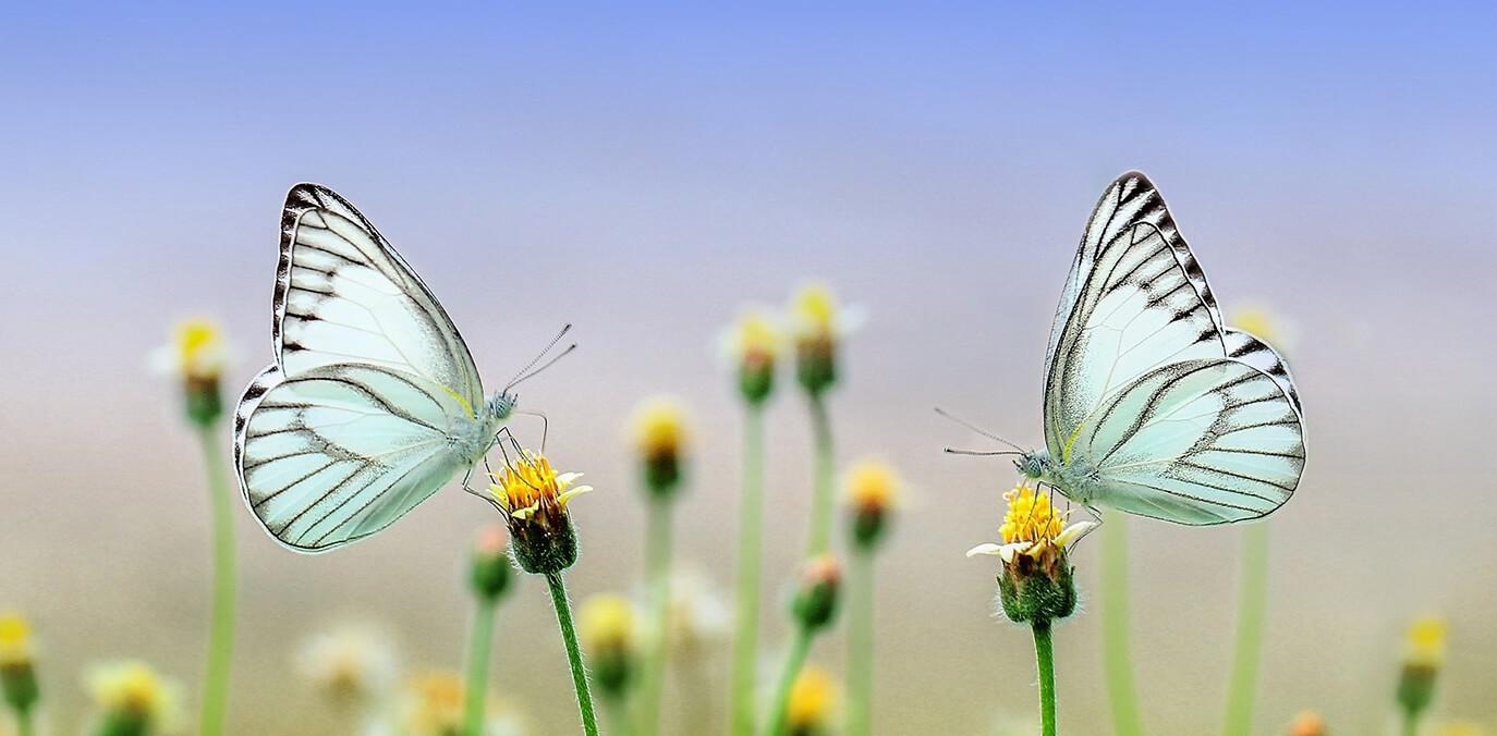 Schmetterlingskinder jetzt mit kostenloser Spende durch Magenta unterstützen